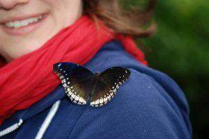 Afbeelding tiener vlinder