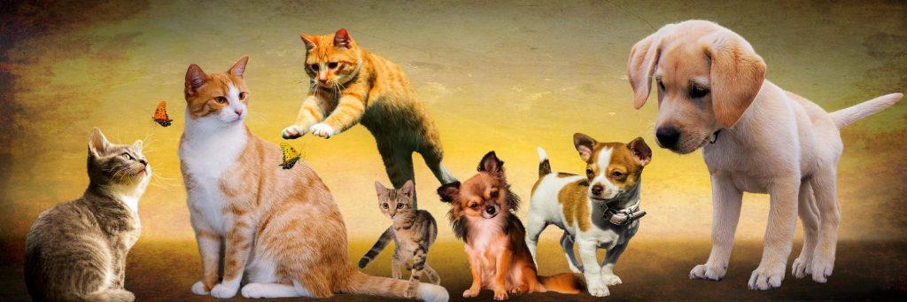 Afbeelding Katten Honden Fantasie